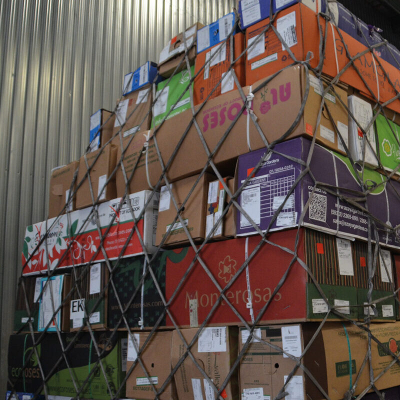 Groothandels voorraad ecuador rozen pre-order
