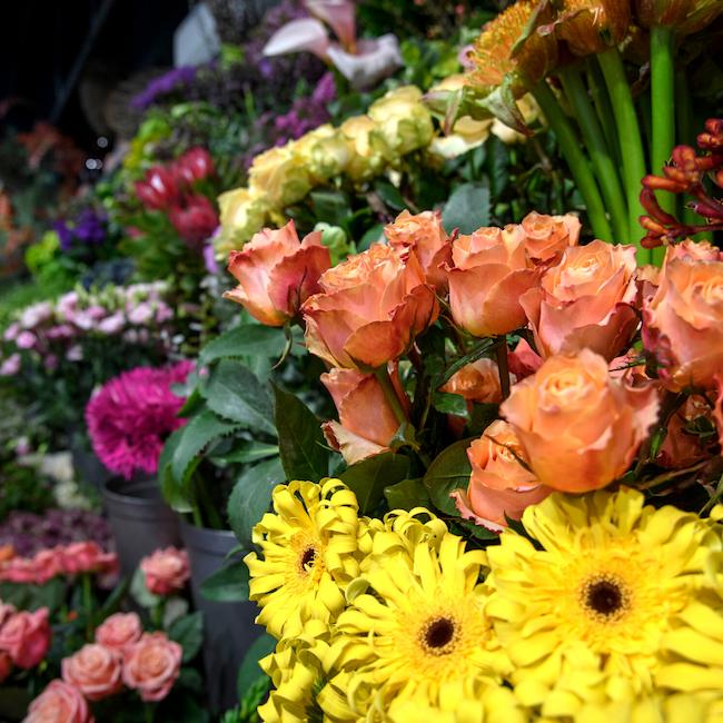 Farm Direct Premium Bloemen _ Voor Bloemisten