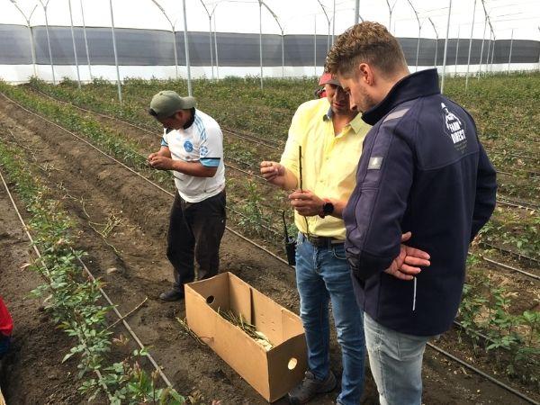 Gecertificeerde kwekers MVO Farm Direct
